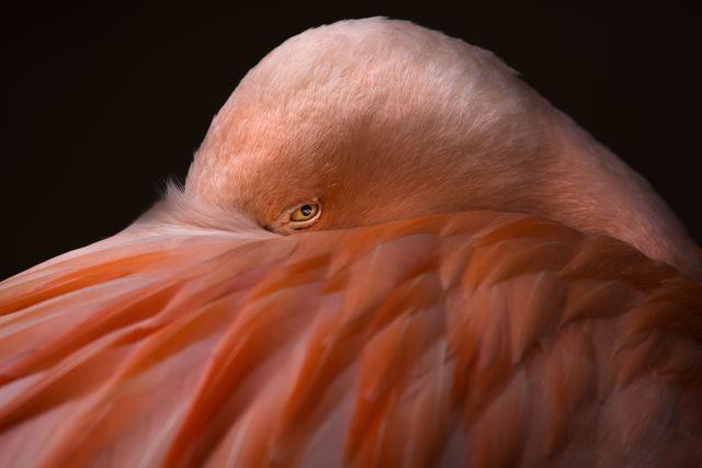flamingoeye